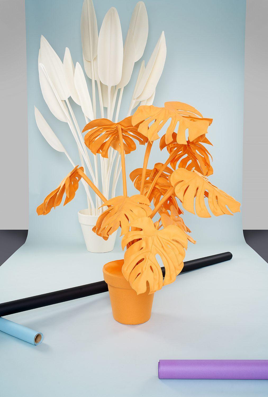 Wandschappen-Plant (c) Isabel Croon isbelcroon.nl